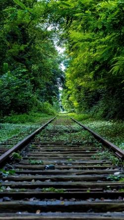 railroad grass trees
