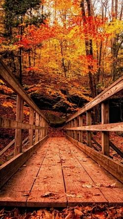 wooden structure forest autumn