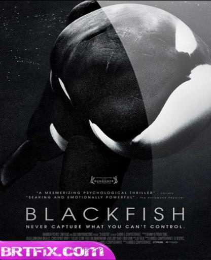 Kara Balık - Blackfish 2013 BRRip m720p Türkçe Dublaj Belgesel İndir