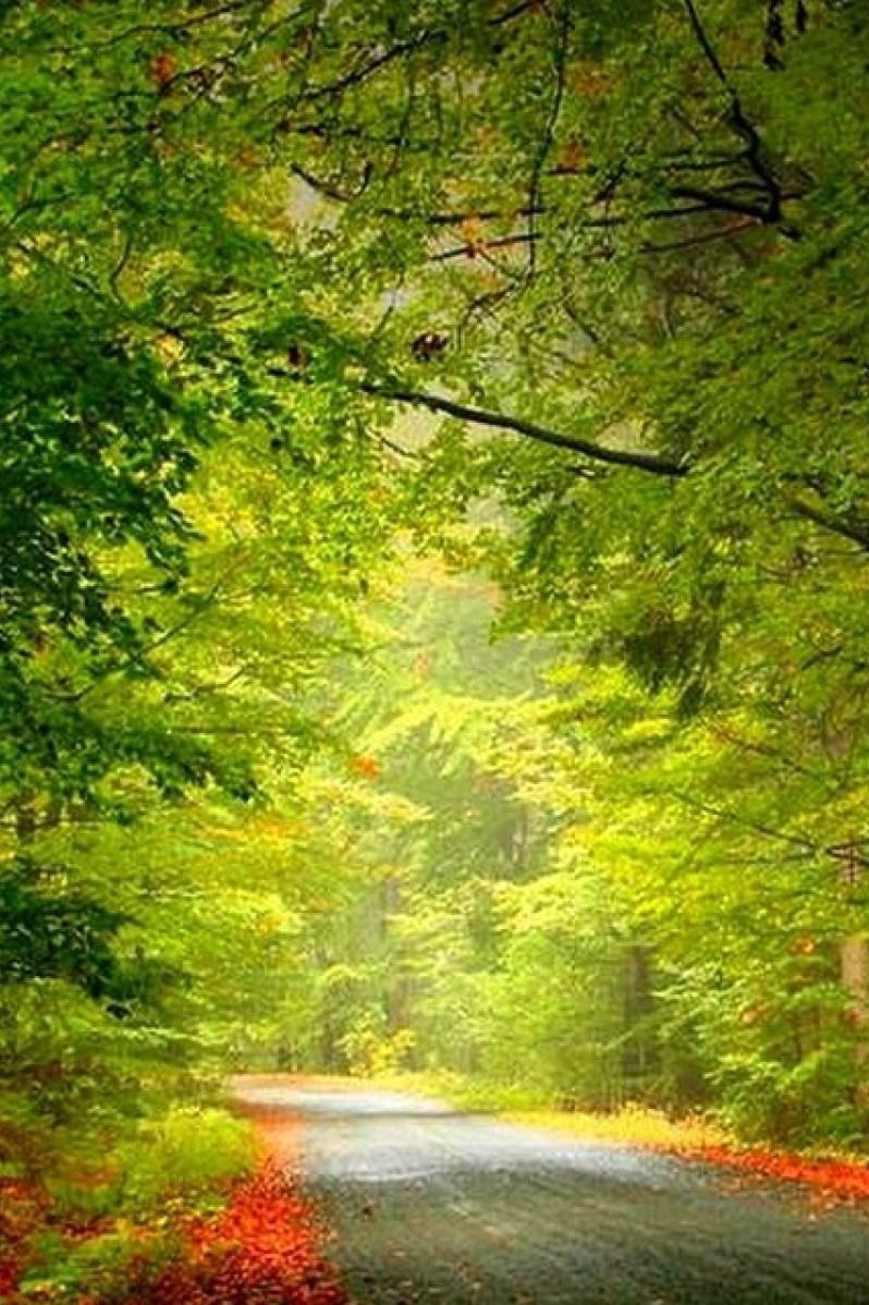 nature phone wallpaper full hd 225 wallpaper