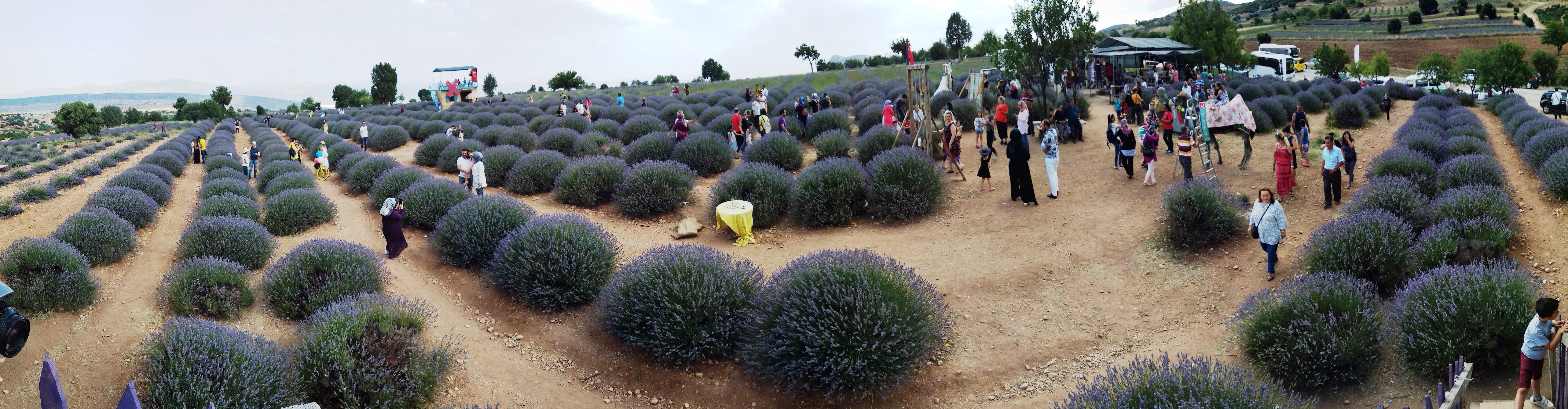 Lavanta bahçesi Isparta