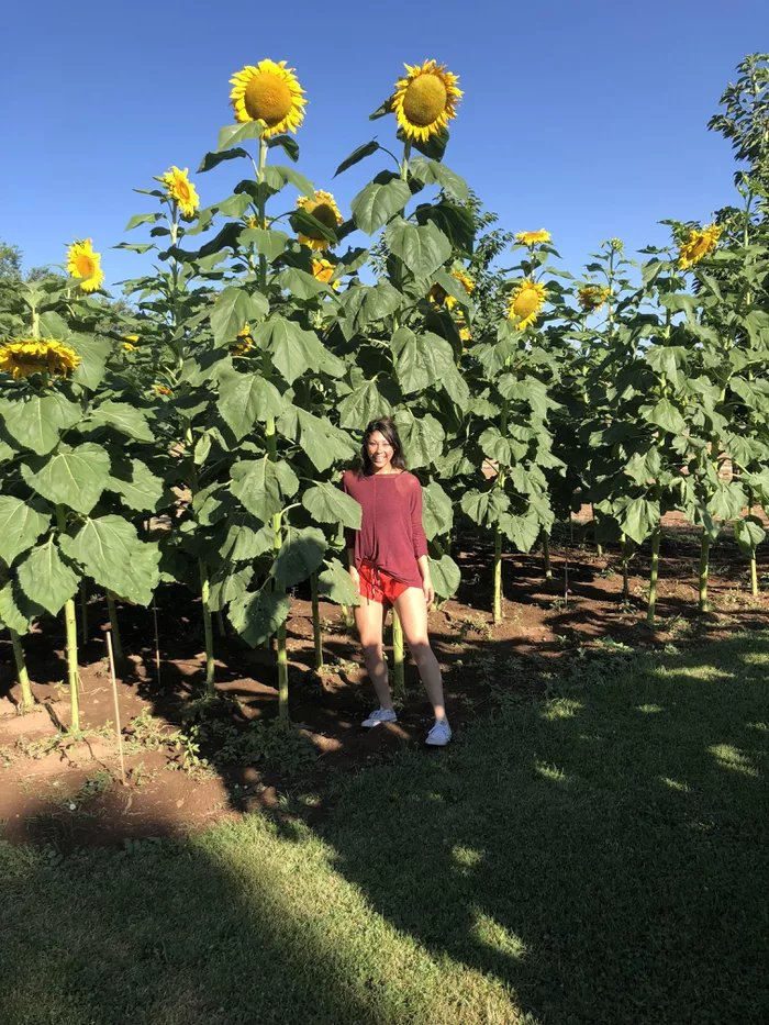 My-aunts-sunflower-garden-in-Utah