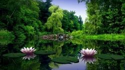 water ilies leaves bridge trees