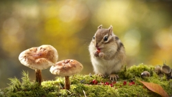 Chipmunk Eatin