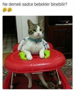 kedi (5)