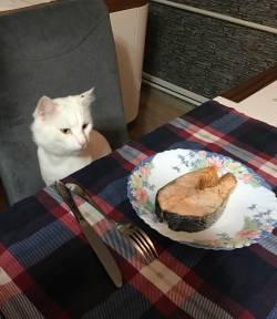 kedi (10)