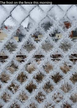 The frost on the fence this morning