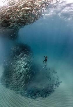 Fish-tornado
