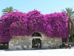 çiçekli kapılar (5)