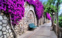 çiçekli kapılar (1)