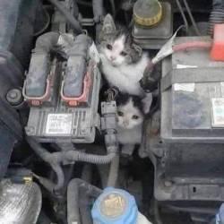 kışın motordaki kedi